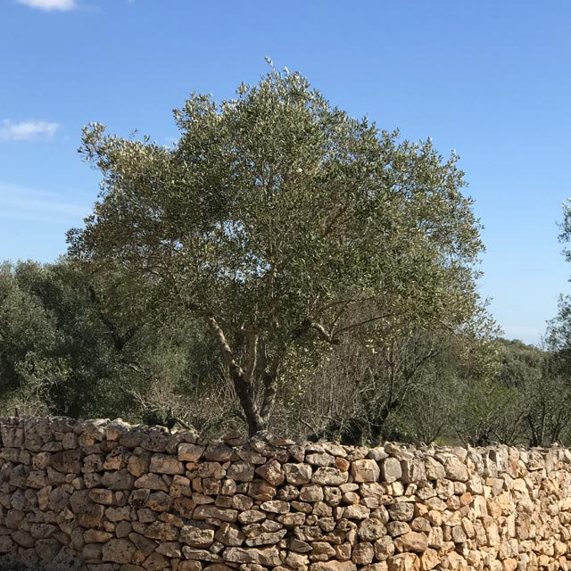 Holiday accommodation in quiet rural setting in Puglia, Italy